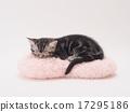 垫子 小猫 睡着 17295186