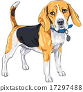 vector sketch serious dog Beagle breed  17297488