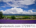 farm, tomita, lavander 17299731