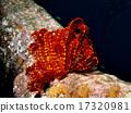 戴水肺潜水 岩石地带 海底 17320981