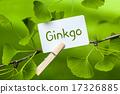 ginkgo, forgetfulness, vertigo 17326885