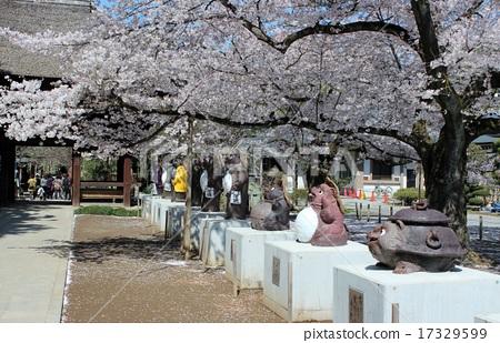 Cherry blossoms and brown pot of Maolin-ji 17329599
