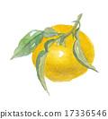 檸檬 水彩畫 水彩 17336546