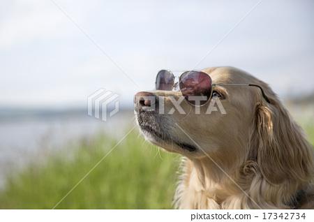 墨鏡 太陽鏡 獵犬 17342734