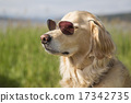cool, one animal, unique 17342735