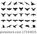 birds 17344635