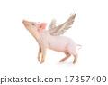 pig 17357400