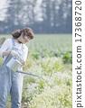 人 園藝 夫人 17368720