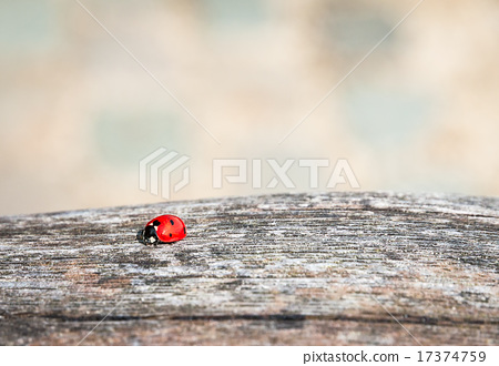 Ladybug walking along weathered old wooden board 17374759