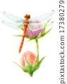 蜻蜓 花蕾 蓓蕾 17380279
