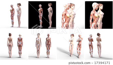 Nude female and muscle specimen perming3DCG illustration material 17394171
