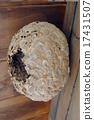 蜂窩 蜂房 窩 17431507