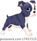 Boston Terrier Cub 17457315