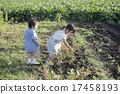 gather, harvest, person 17458193