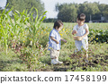 child, harvest, person 17458199