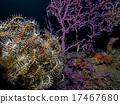 海鲜 海产品 戴水肺潜水 17467680