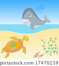Sea creatures on a beach 17470239
