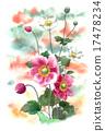 秋牡丹 花朵 花 17478234