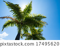 botanic, tree, foreign countries 17495620