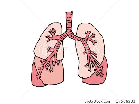 Lung structure (without letters) 17506533