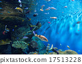coral aquarium tropical 17513228