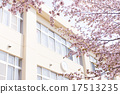 School and cherry blossoms 17513235