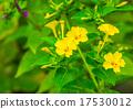 開花 花 黃色 17530012