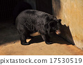 Large bear with black fur at the zoo 17530519