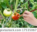 paintbrush paints red ripe tomato in garden 17535067