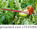 paintbrush and painted red ripe tomato 17535068