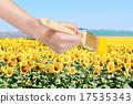 paintbrush paints yellow field of sunflowers 17535343