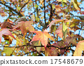 Autumn maple tree 17548679