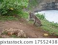 ลิง,ป่า,ซึ่งมาจากป่า 17552438