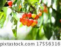 櫻桃 水果 變得 17556316