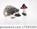 哺乳动物 刺猬 秋天 17564304