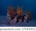 scuba diving, scuba dive, rocky stretch 17565952