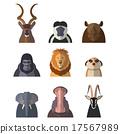 hippopotamus, animals, lion 17567989