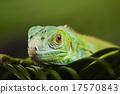 Anole lizard, bright colorful vivid theme 17570843