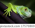 蜥蜴 壁虎 龙 17570869