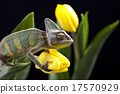 Chameleon and flower, bright vivid exotic climate 17570929