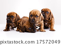 Baby dogs, beautiful bright pet concept 17572049
