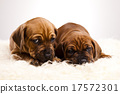 Dogs, beautiful bright pet concept 17572301
