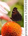 Summer garden 17589590