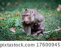 Monkey mother is breastfeeding in the wild. 17600945
