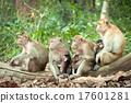 Monkey mothers were breastfeeding in the wild. 17601281