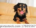 A dog 17605567