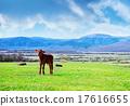 rural landscape 17616655