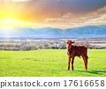 rural landscape 17616658