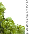 hop, wild, cutout 17635412