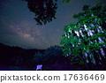 南國的花 銀河 玉蕊 17636469